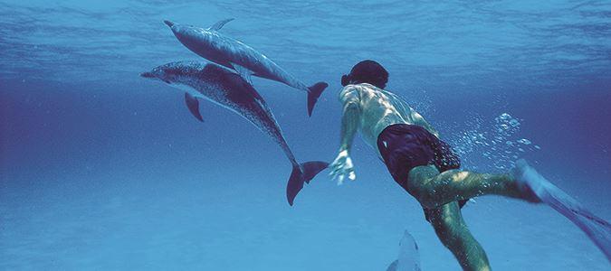 Dolphin Encounters