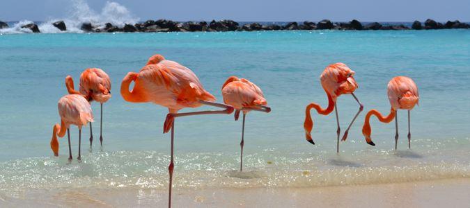 Renaissance Aruba Resort & Casino - All Inclusive Detailed
